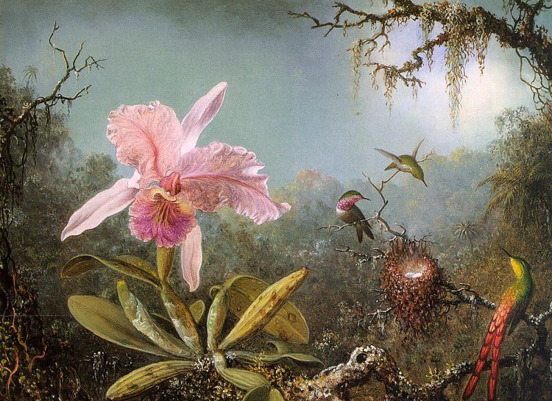 Martin Johnson Heade Cattelya Orchid and Three Brazilian Hummingbirds