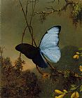 Blue Canvas Paintings - Blue Morpho Butterfly